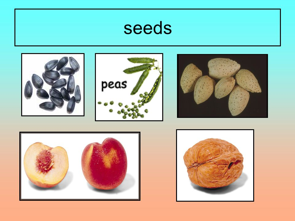 Now test yourself 1.A seed grows into a ……………….2.A seed needs … … … … … and ……………… to grow.
