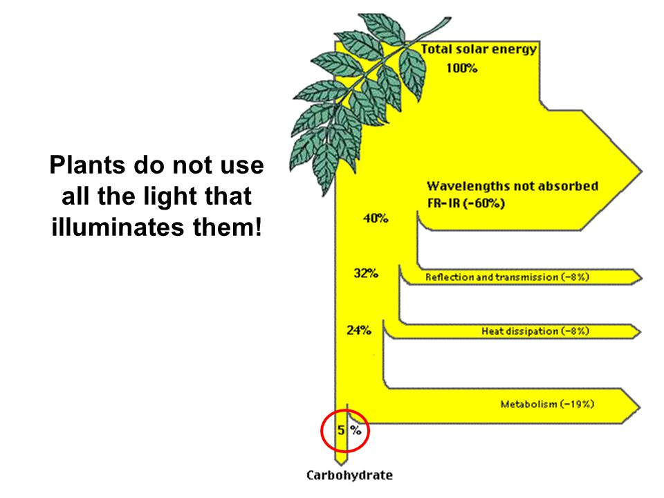 Plants do not use all the light that illuminates them!
