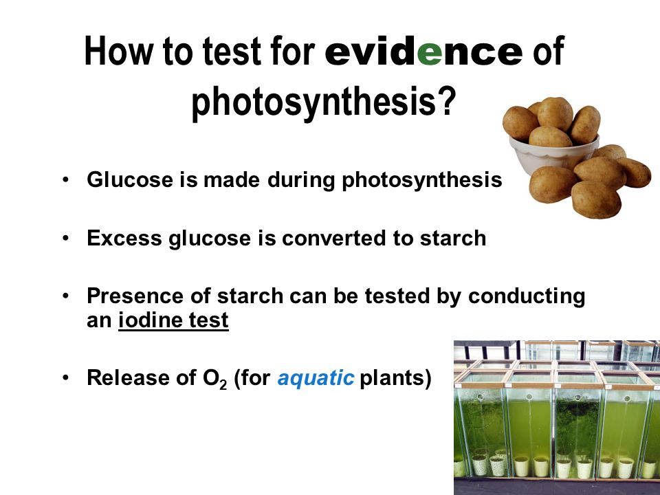 How to test for evidence of photosynthesis.