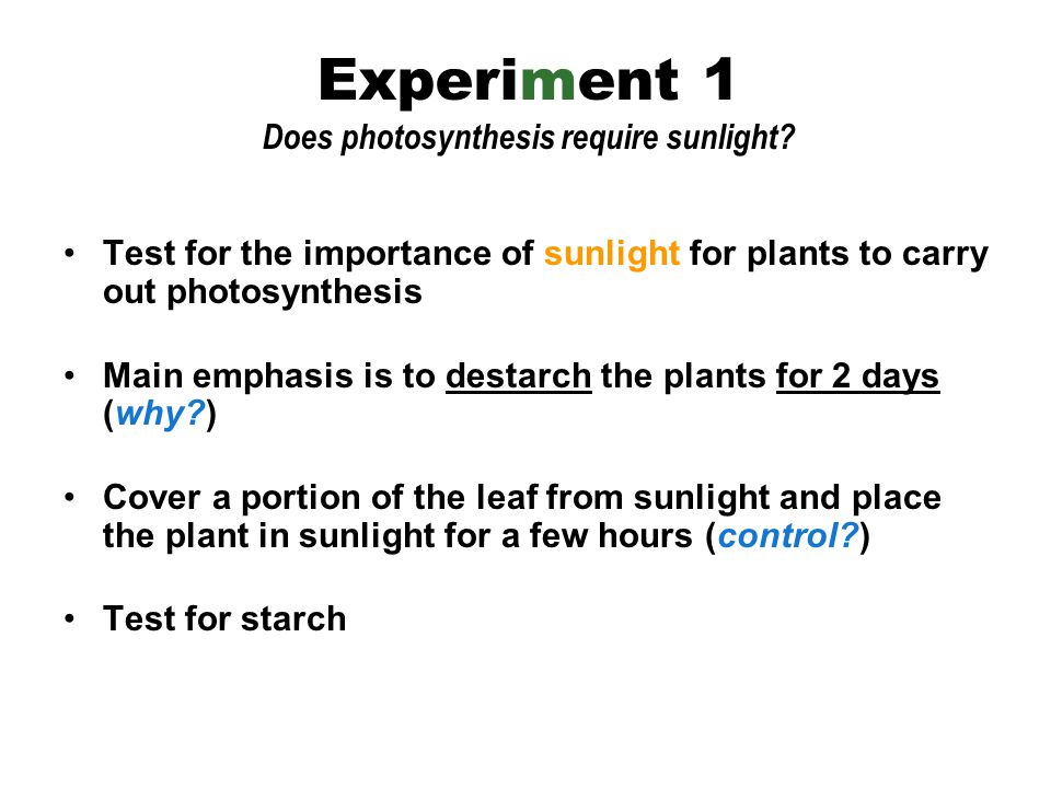 Experiment 1 Does photosynthesis require sunlight.
