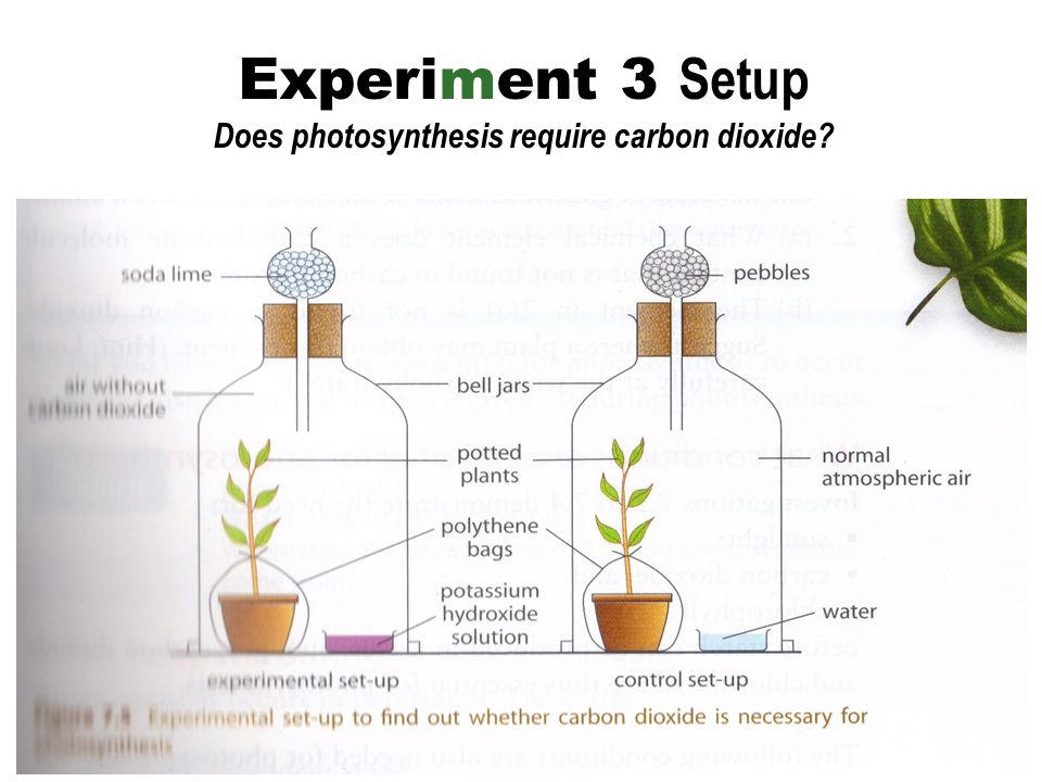 Experiment 3 Setup Does photosynthesis require carbon dioxide?