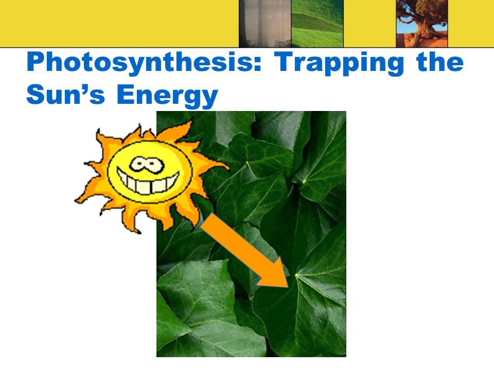 Trapping Energy From Sunlight To use the energy of the sun's light, plant cells must trap and store it in a form that is readily usable by cell organelles, ATP
