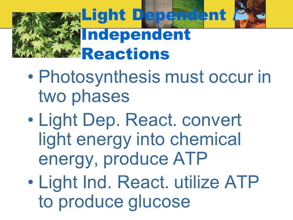 Growth and Plant Hormones 5 major groups of plant hormones –Auxins –Gibberellins –Cytokinins –Abscisic Acid –Ethylene