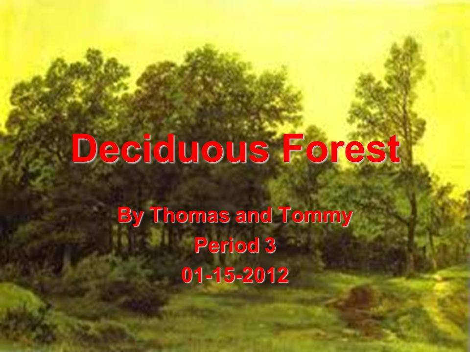 Deciduous Forest By Thomas and Tommy Period 3 01-15-2012