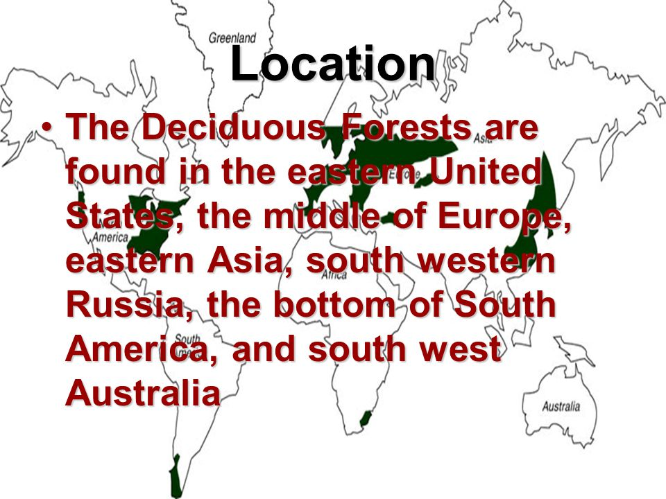 Location The Deciduous Forests are found in the eastern United States, the middle of Europe, eastern Asia, south western Russia, the bottom of South America, and south west AustraliaThe Deciduous Forests are found in the eastern United States, the middle of Europe, eastern Asia, south western Russia, the bottom of South America, and south west Australia