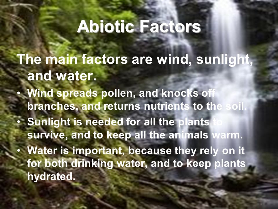 Abiotic Factors The main factors are wind, sunlight, and water.