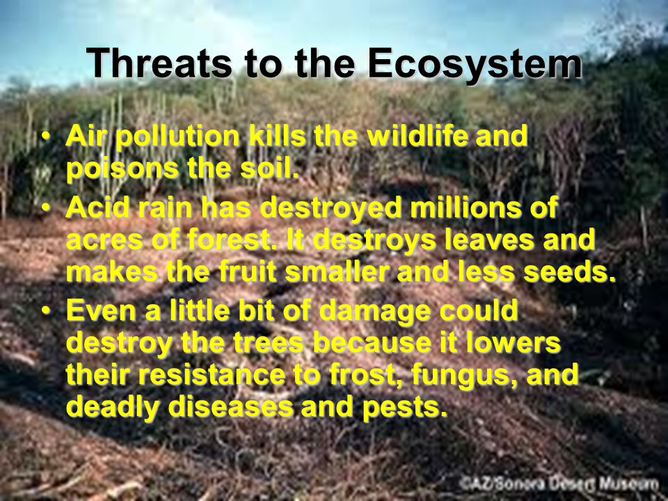 Threats to the Ecosystem Air pollution kills the wildlife and poisons the soil.Air pollution kills the wildlife and poisons the soil.