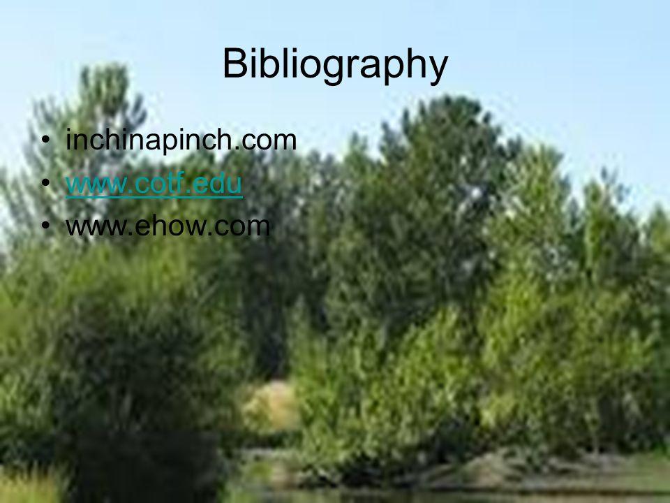 Bibliography inchinapinch.com www.cotf.edu www.ehow.com