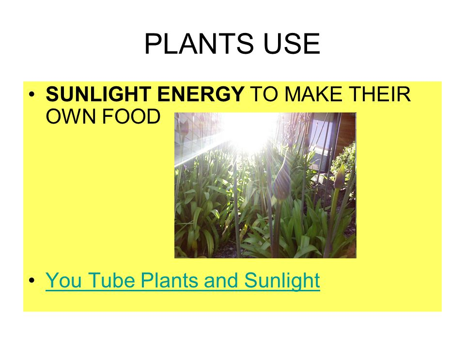 Photosynthesis is the most important chemical process on earth because: It provides food for virtually all organisms