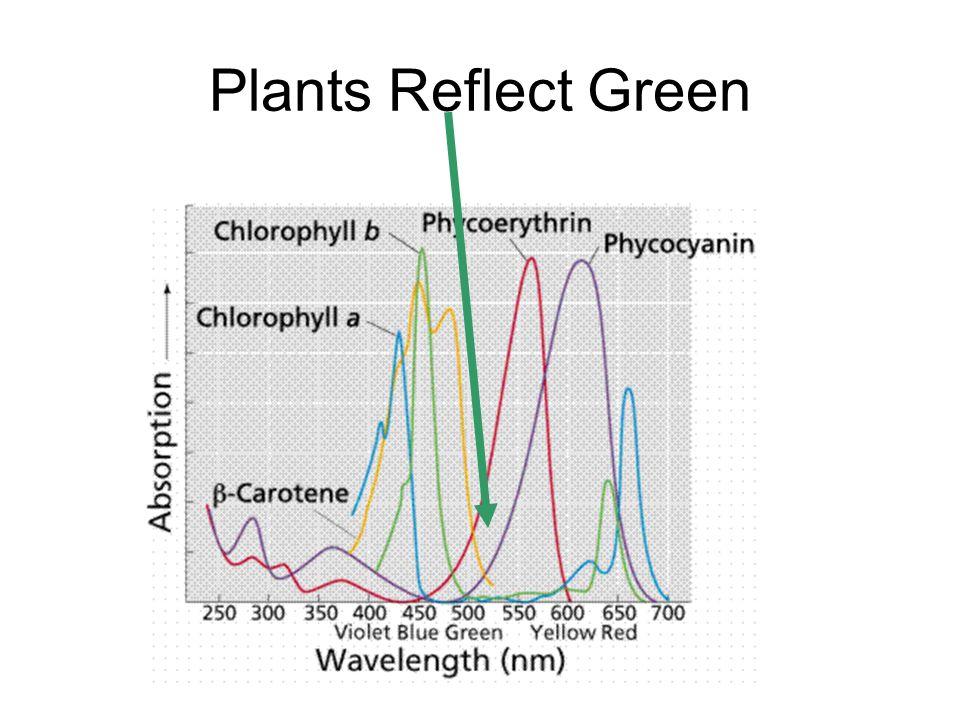 Plants Reflect Green