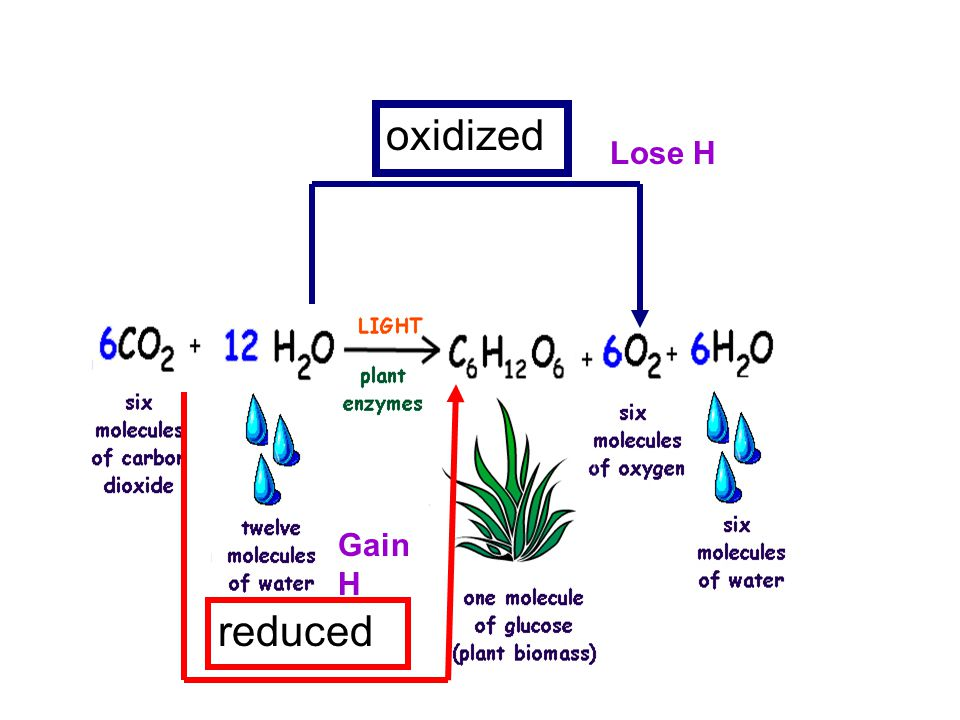 oxidized reduced Gain H Lose H