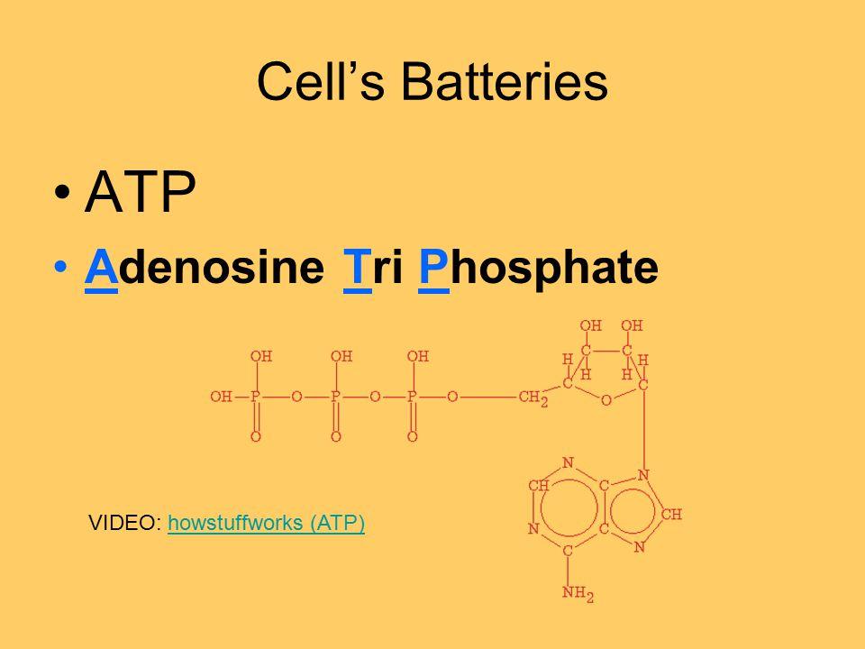 Cell's Batteries ATP Adenosine Tri Phosphate VIDEO: howstuffworks (ATP)howstuffworks (ATP)