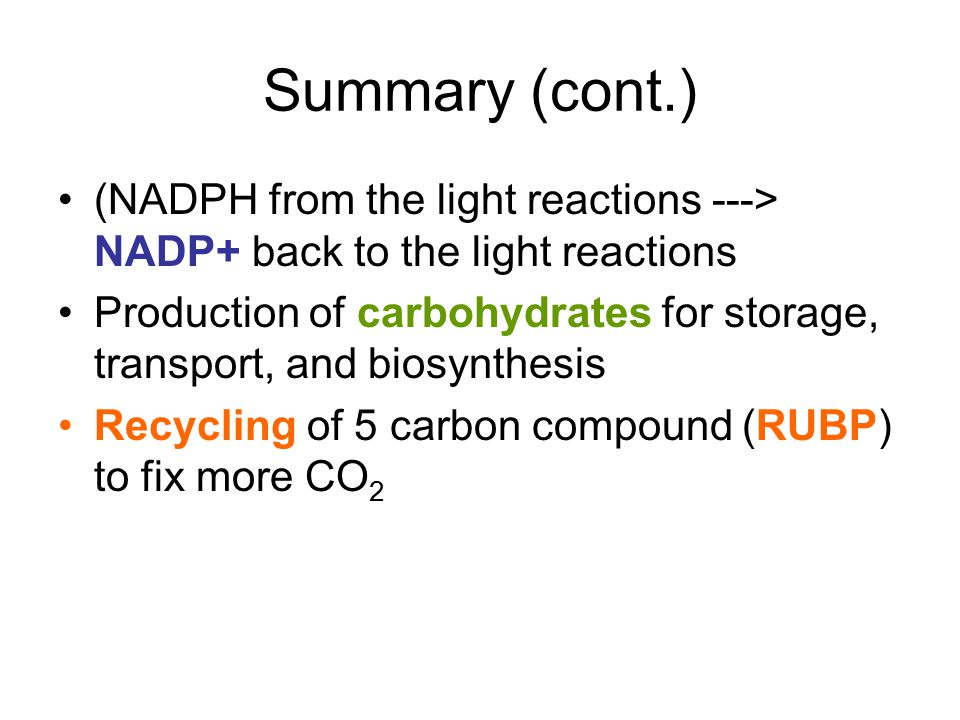 Summary (cont.) (NADPH from the light reactions ---> NADP+ back to the light reactions Production of carbohydrates for storage, transport, and biosynt