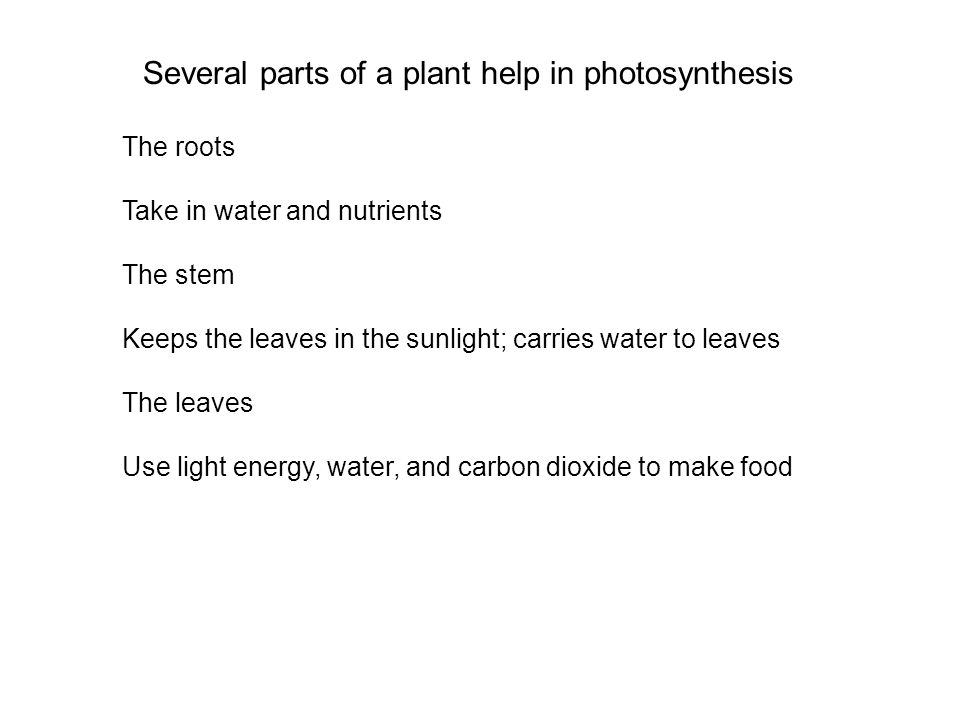 Several parts of a plant help in photosynthesis The roots Take in water and nutrients The stem Keeps the leaves in the sunlight; carries water to leaves The leaves Use light energy, water, and carbon dioxide to make food