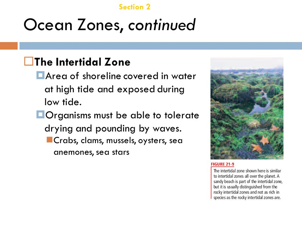 Chapter 21 Three Lake Zones Section 2 Aquatic Ecosystems