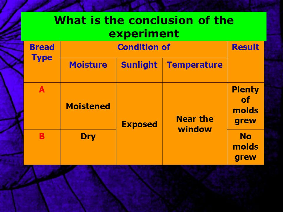 Bread Type Condition ofResult MoistureSunlightTemperature A Moistened Exposed Near the window Plenty of molds grew BDryNo molds grew What is the conclusion of the experiment