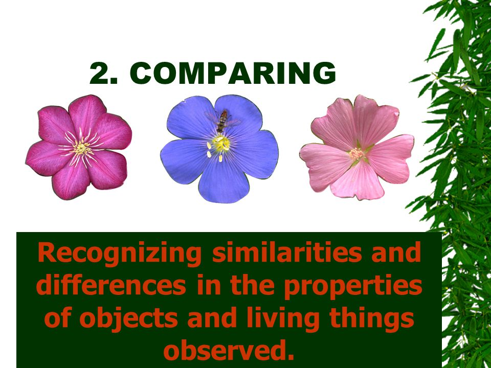2. COMPARING Recognizing similarities and differences in the properties of objects and living things observed.