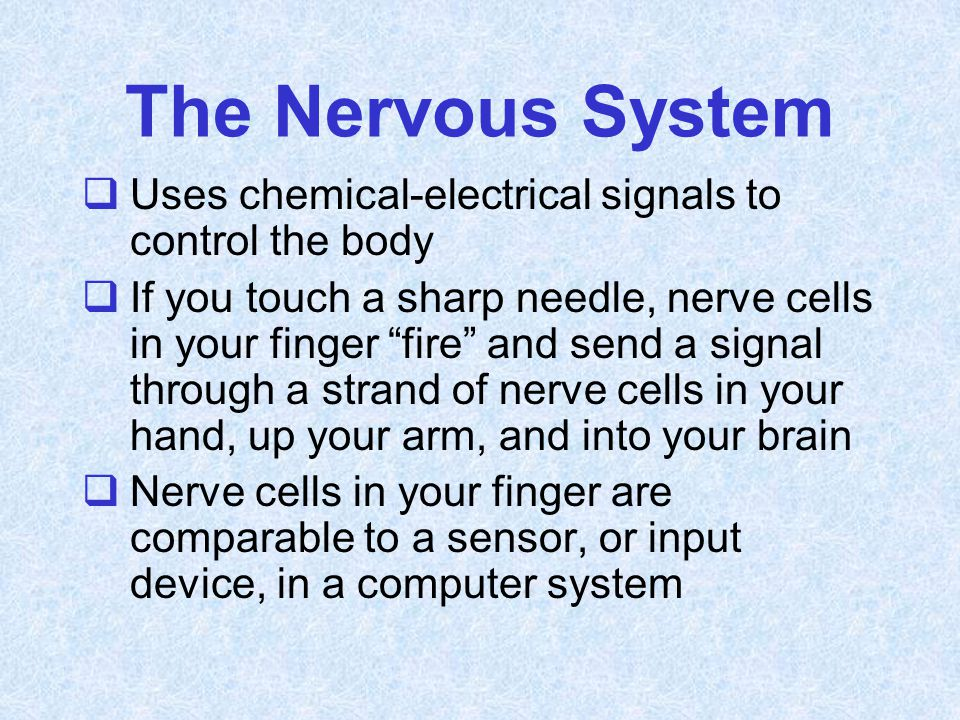 """The Nervous System  Uses chemical-electrical signals to control the body  If you touch a sharp needle, nerve cells in your finger """"fire"""" and send a"""