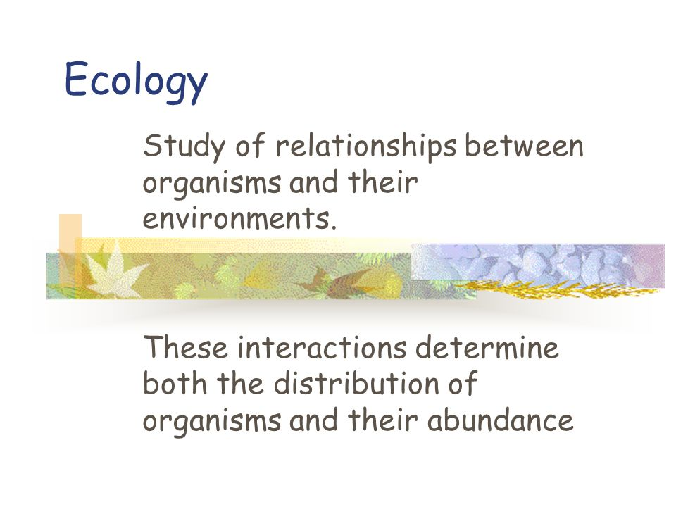 Ecology Study of relationships between organisms and their environments.