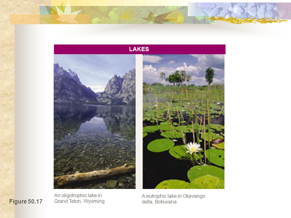 Figure 50.17 An oligotrophic lake in Grand Teton, Wyoming A eutrophic lake in Okavango delta, Botswana LAKES