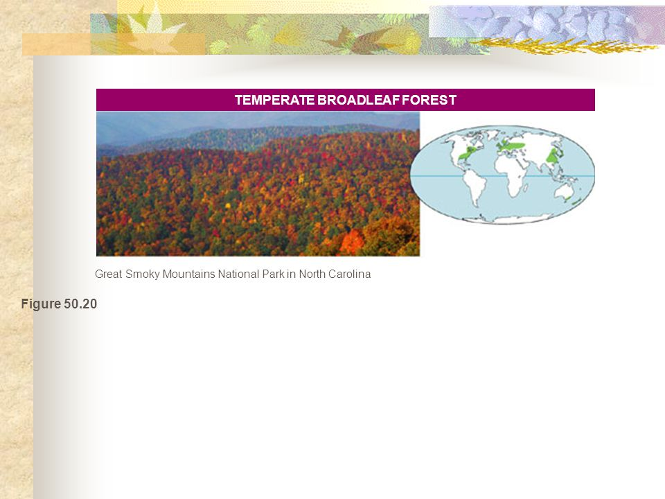 Figure 50.20 TEMPERATE BROADLEAF FOREST Great Smoky Mountains National Park in North Carolina