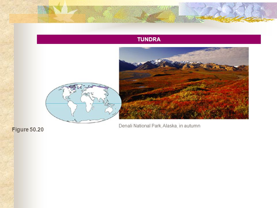 Figure 50.20 TUNDRA Denali National Park, Alaska, in autumn