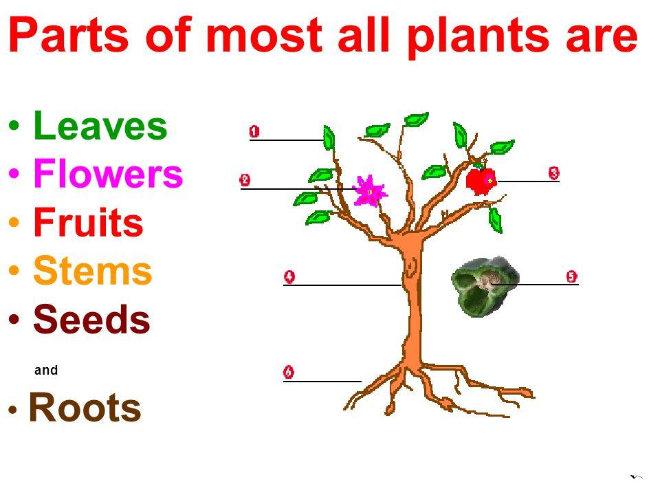 ORANGE TREEAPPLE TREECHERRY TREE PLUM TREE PEACH TREE TYPES OF TREES: FRESH FRUIT