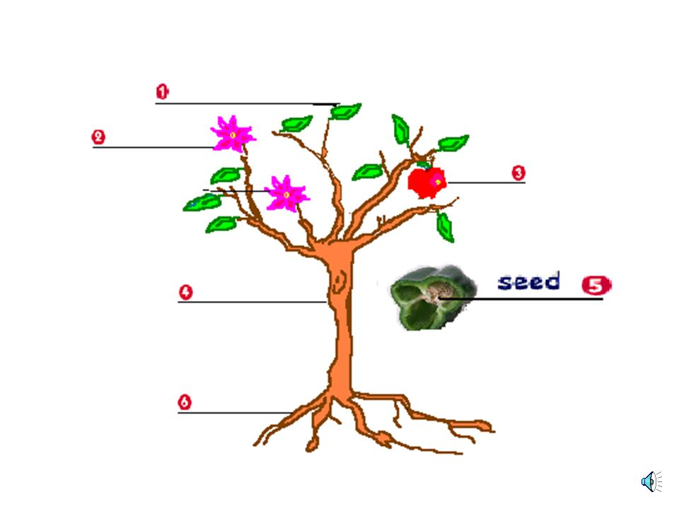 PLANTS PARTS RootsFruitStemsLeavesFlowers Petals Sepal Stamen Pistil CLASSES TreesShrubsHerbs NEED Light WaterAirNutrients
