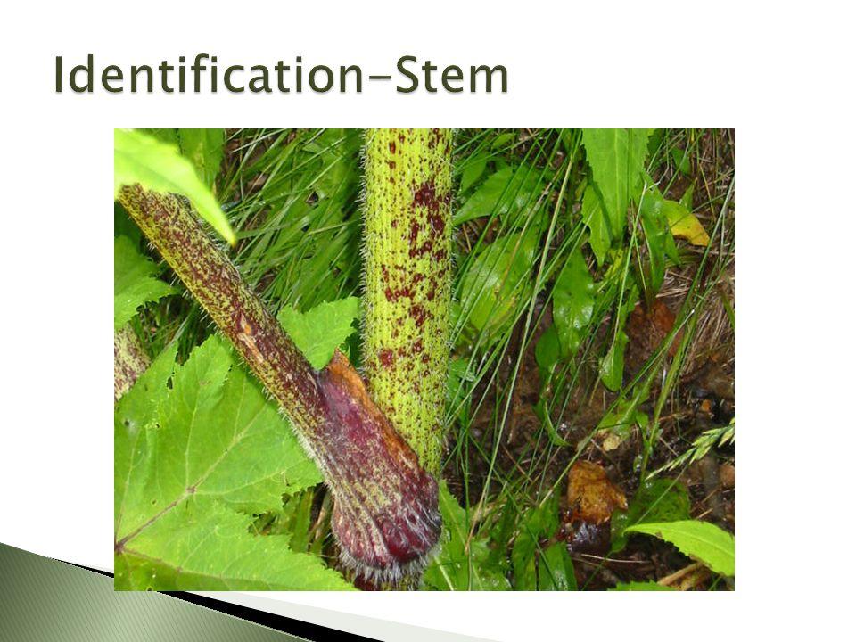 http://www.wspenvironmental.com/expertise/invasive-species-control