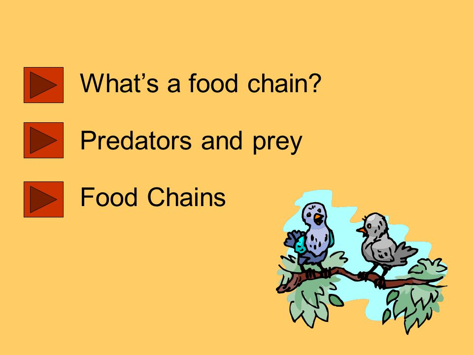 What's a food chain Predators and prey Food Chains