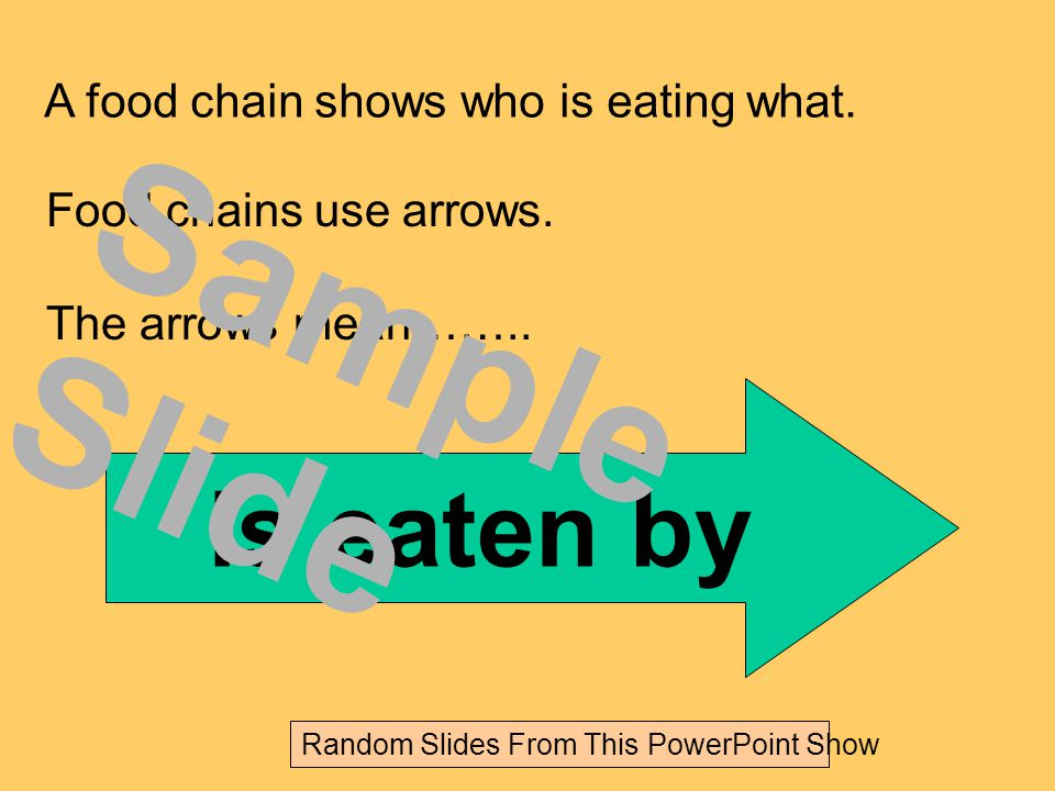 Or it could be….. Grass Mouse Fox Sample Slide Random Slides From This PowerPoint Show