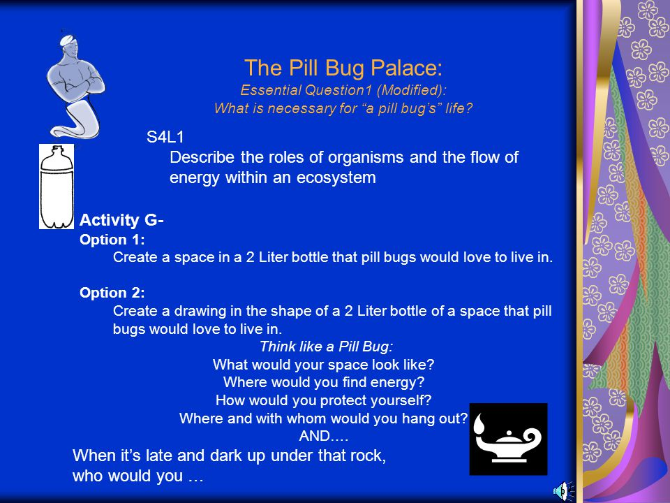 The Pill Bug Palace: Essential Question1 (Modified): What is necessary for a pill bug's life.