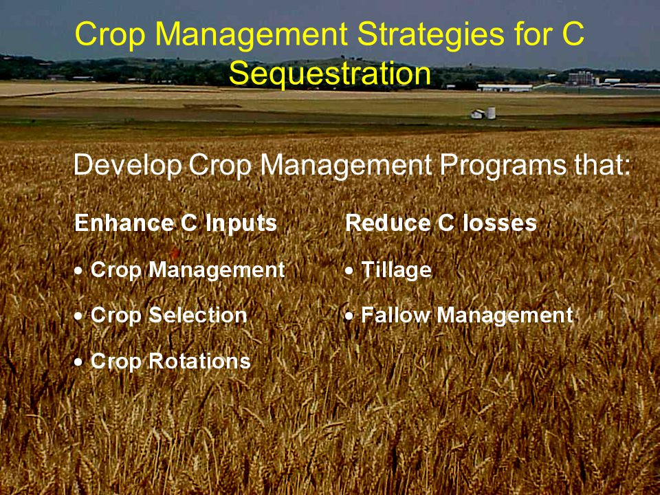 Crop Management Strategies for C Sequestration Develop Crop Management Programs that: