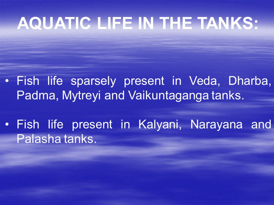 AQUATIC LIFE IN THE TANKS: Fish life sparsely present in Veda, Dharba, Padma, Mytreyi and Vaikuntaganga tanks.