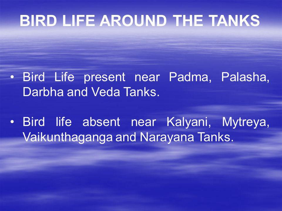 BIRD LIFE AROUND THE TANKS Bird Life present near Padma, Palasha, Darbha and Veda Tanks.