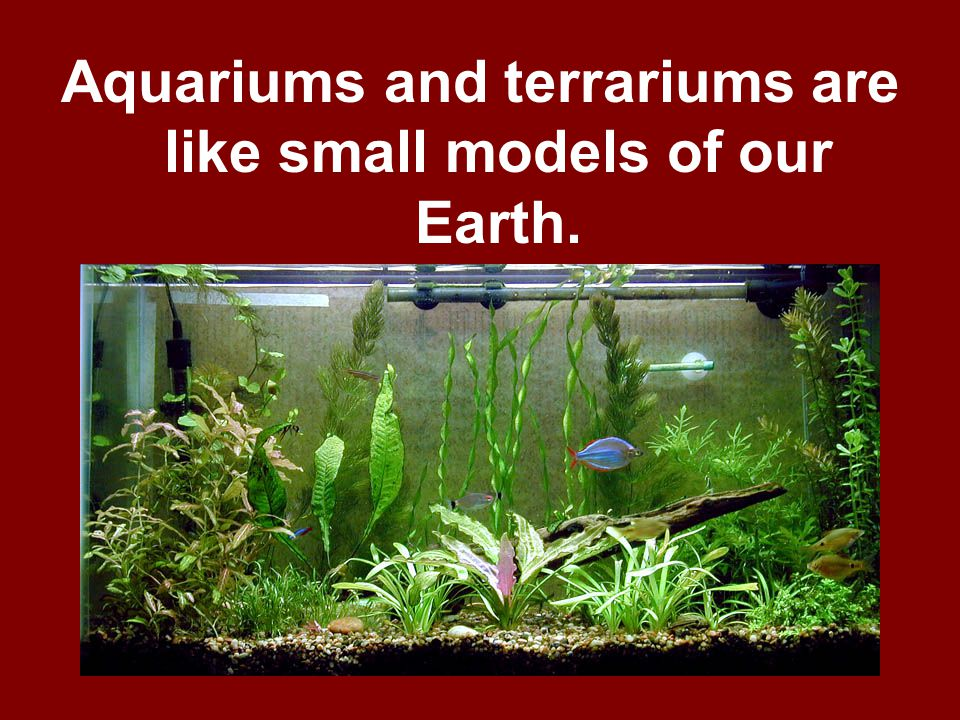 Aquariums and terrariums are like small models of our Earth.