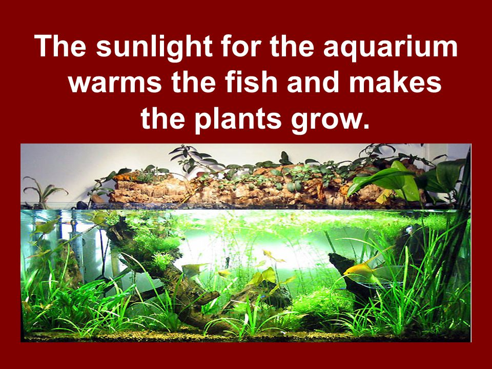 The sunlight for the aquarium warms the fish and makes the plants grow.