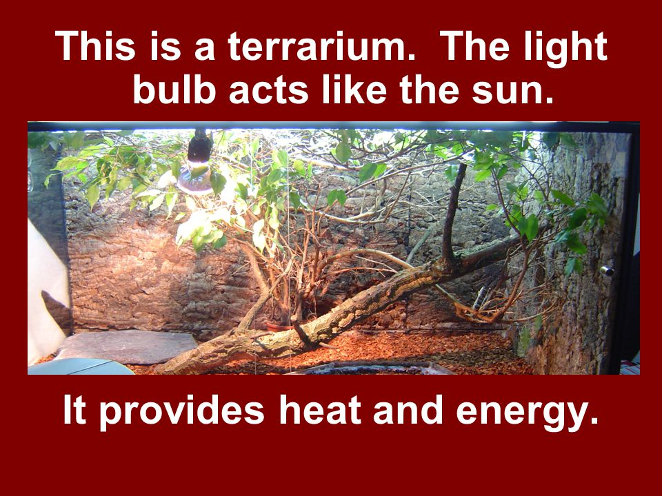 This is a terrarium. The light bulb acts like the sun. It provides heat and energy.