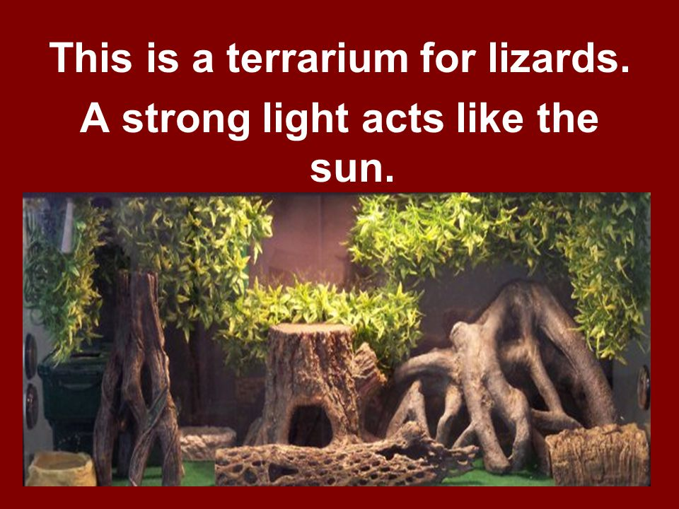 This is a terrarium for lizards. A strong light acts like the sun.