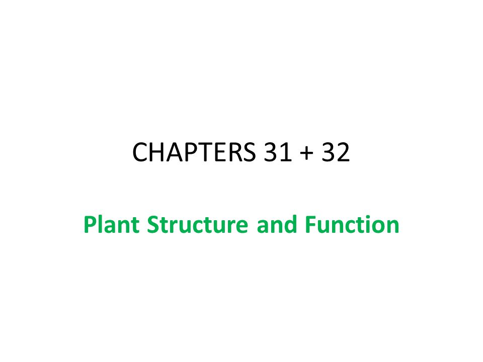 CHAPTERS 31 + 32 Plant Structure and Function