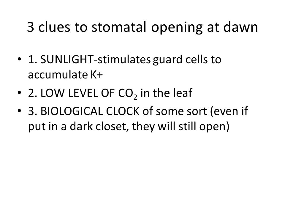 If it is a drought, WHAT HAPPENS.The stomata will close to reduce water loss and prevent wilting.