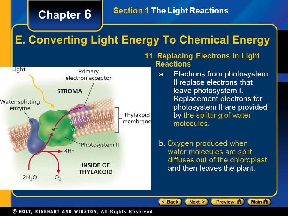Section 1 The Light Reactions Chapter 6 E. Converting Light Energy To Chemical Energy 11. Replacing Electrons in Light Reactions a.Electrons from phot