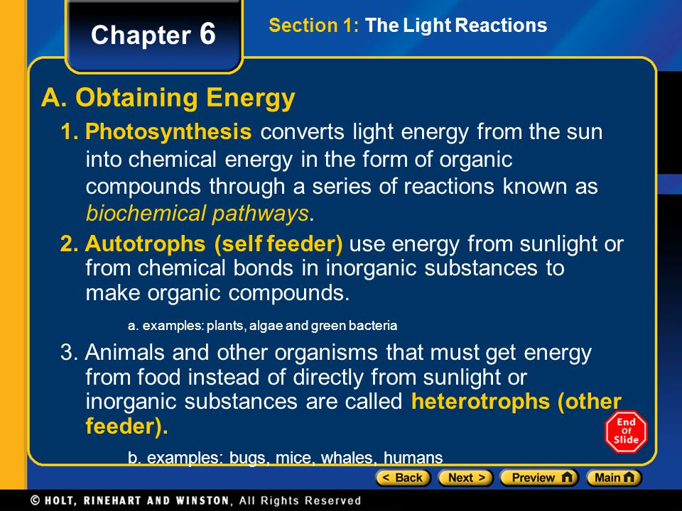 Photosynthesis Chapter 6 Table of Contents Section 1 The Light Reactions Uses Water, Sunlight, Chlorophyll Produces oxygen gas, ATP and NADPH Occurs at Thylakoid and into Stroma Section 2 The Calvin Cycle