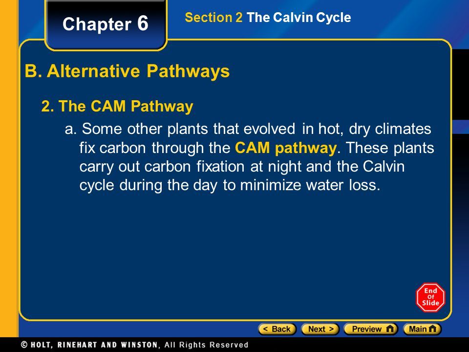 Chapter 6 B. Alternative Pathways 2. The CAM Pathway a. Some other plants that evolved in hot, dry climates fix carbon through the CAM pathway. These