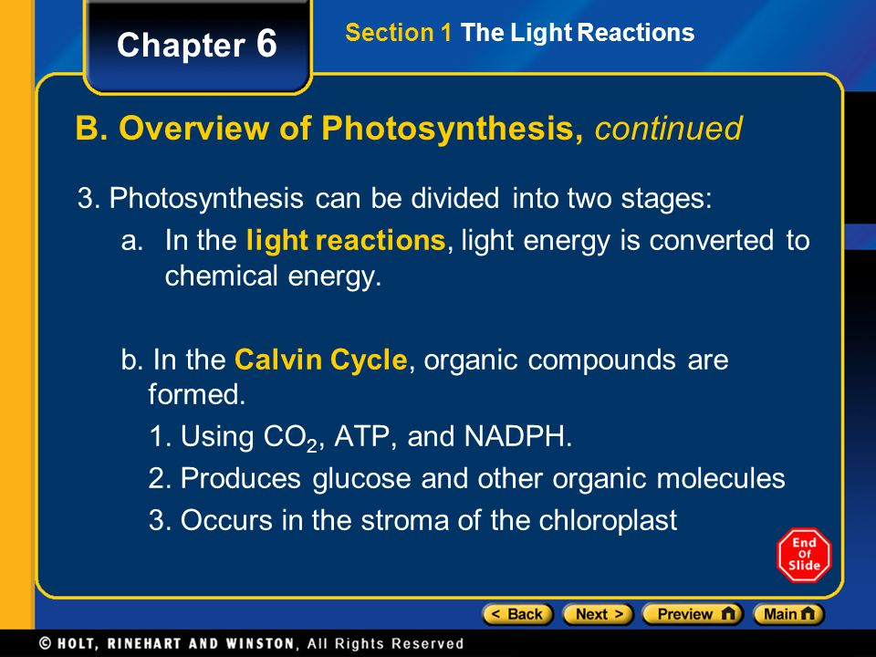 Section 1 The Light Reactions Chapter 6 B. Overview of Photosynthesis, continued 3. Photosynthesis can be divided into two stages: a.In the light reac