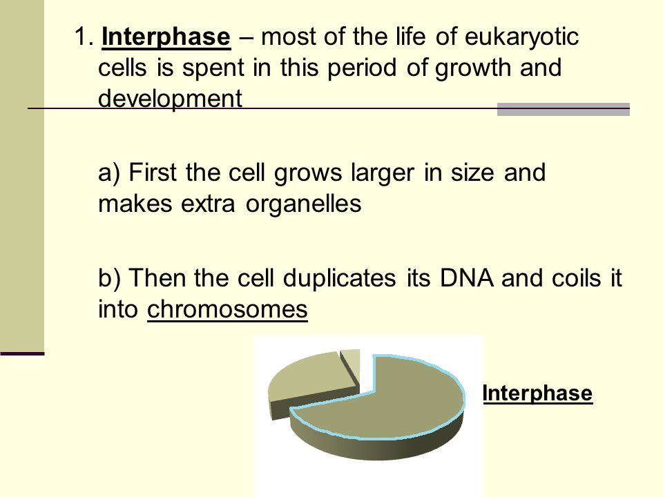 b) The rungs of the ladder are made up of nitrogen bases (Adenine) A - T (Thymine) (Guanine) G - C (Cytosine)