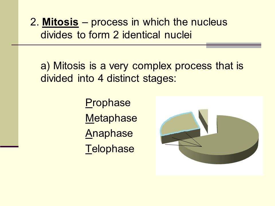 1) Prophase - Nuclear membrane disintegrates - Centrioles move to opposite ends of the cell - Spindle fibers begin to stretch across the cell