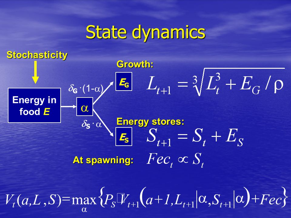 State dynamics Energy in food E  EGEG ESES  G ·  S · Growth: Energy stores: At spawning:  FecSa+1,LVPS a,L V tttSt    111,max),(  (1-  ) Stochasticity