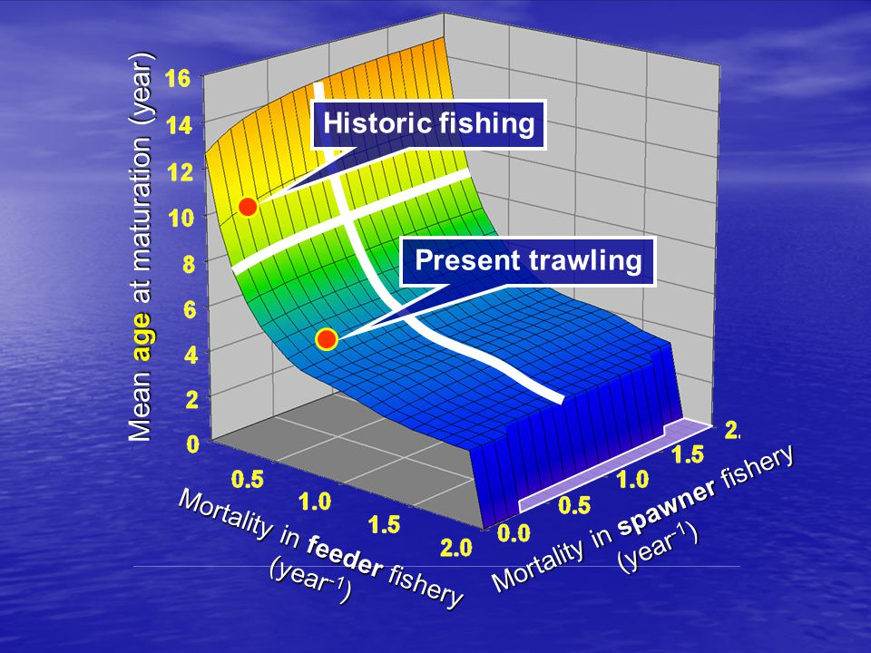Mortality in feeder fishery (year -1 ) Mortality in spawner fishery (year -1 ) Mean age at maturation (year) Historic fishing Present trawling