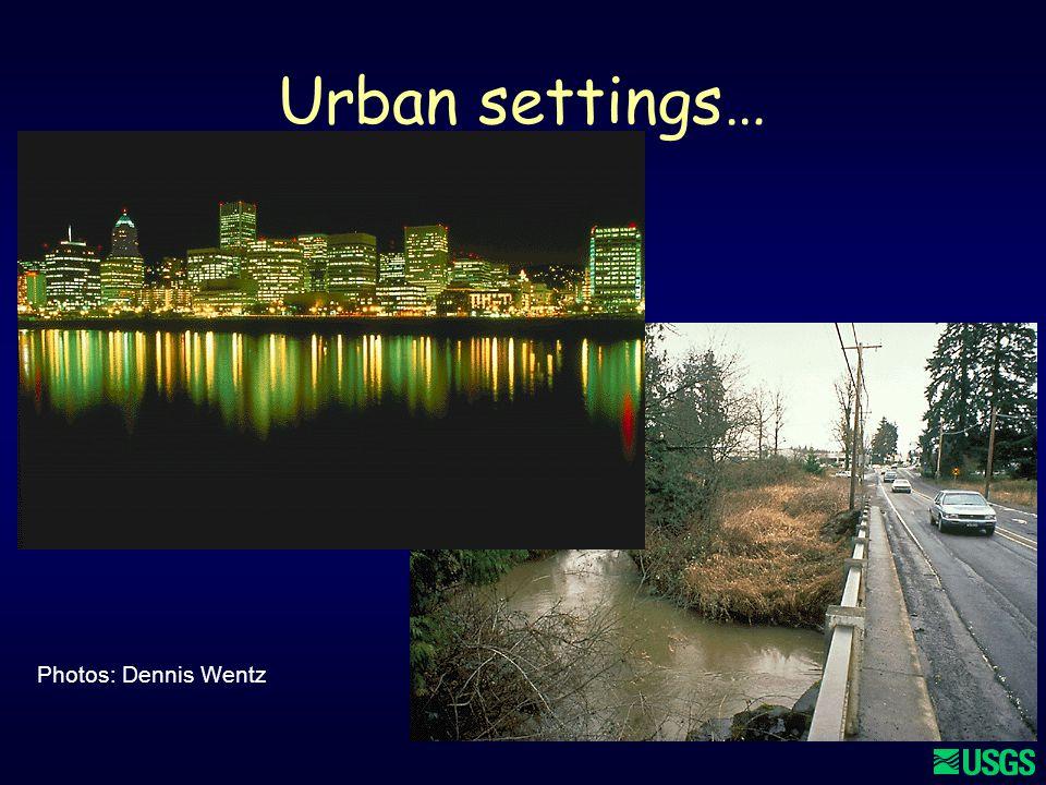 12 Urban settings… Photos: Dennis Wentz